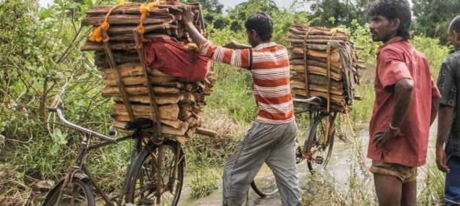 Viaje a Sri Lanka, la perla de asia